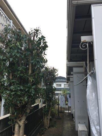マンション共用部にある樹木の伐採と草むしり|相模原市南区のAマンションにて作業施工写真2